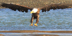 Alaska vacation packages Eagle