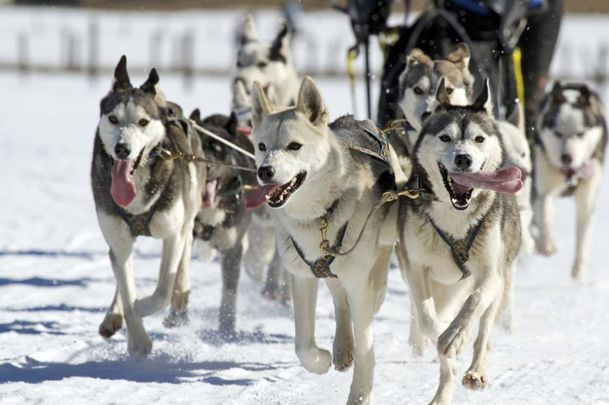 Take an Alaskan Dog Sledding tour!