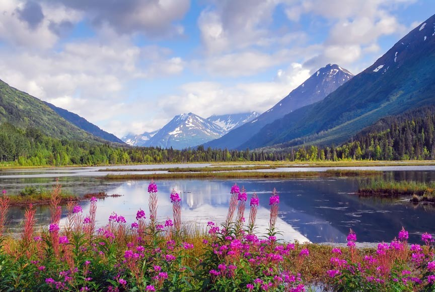 Reasons To Visit Alaska Flora