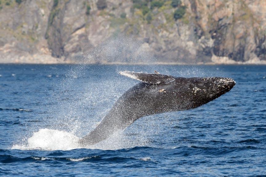 See Alaska Up Close And Personal on a Kenai Fjords Cruise!