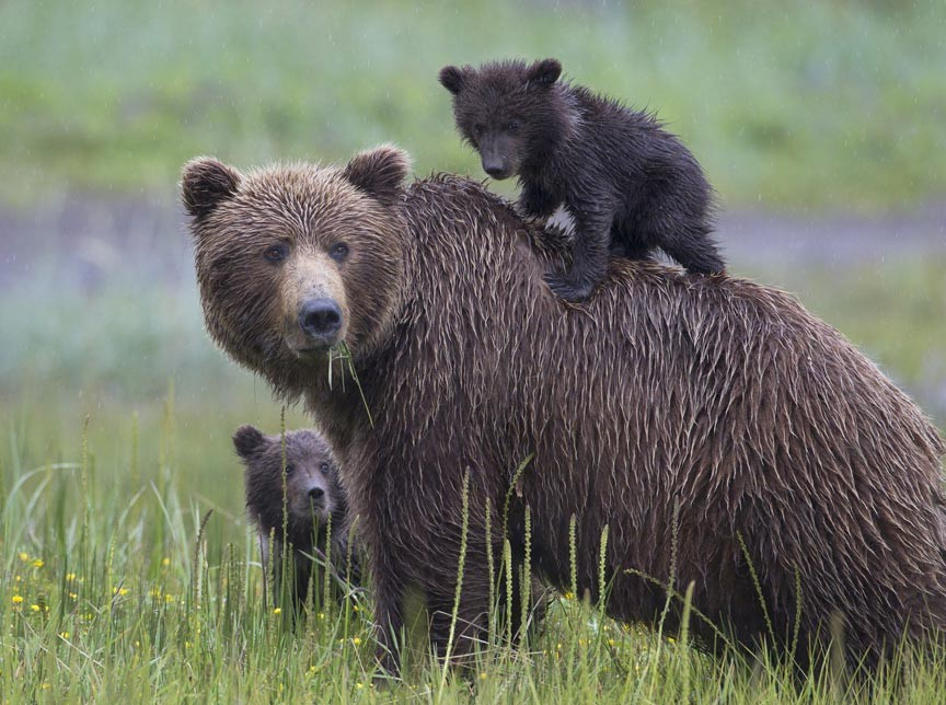 Alaska Bear Viewing Adventure