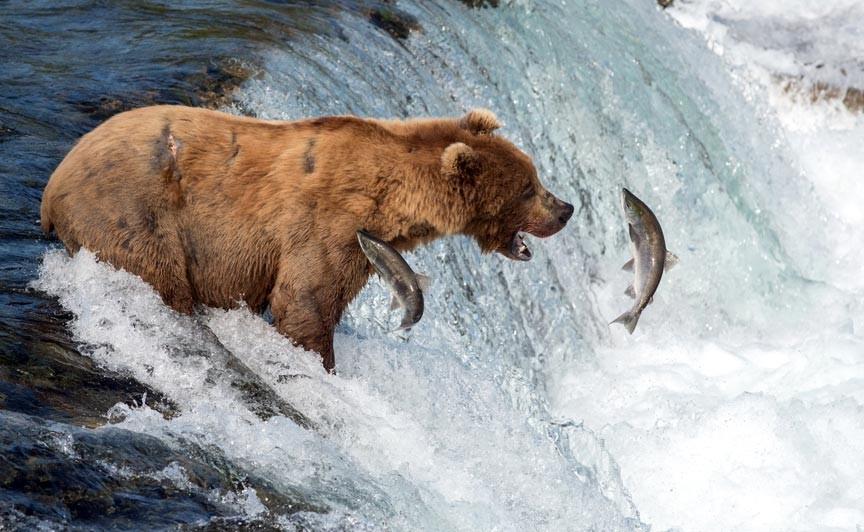 Alaska Adventure Unlimited - the very best Alaska land tours