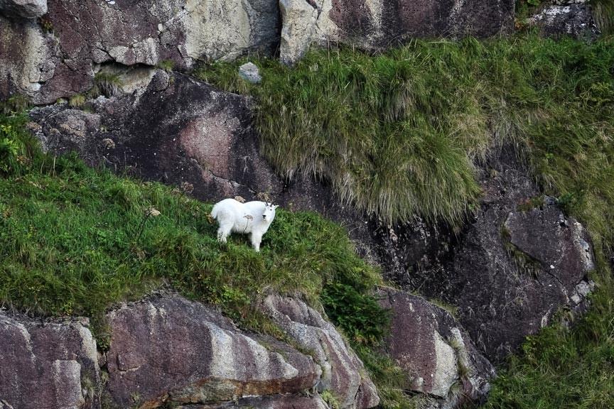 Kenai Fjords National Park tour